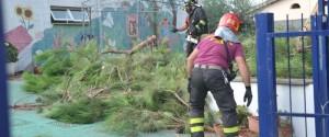 Vigili del fuoco albero caduto