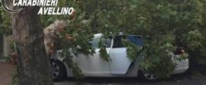 Ramo albero su auto